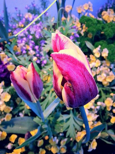 flowers k