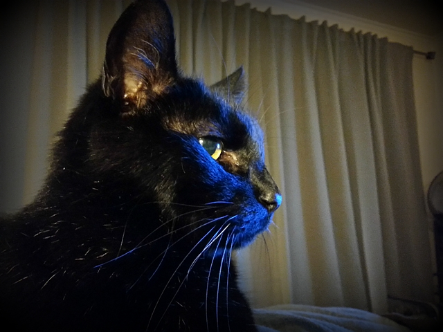 Titanescu awash in the glow of the television as he contemplates world domination