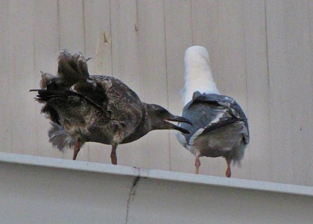 Mom? Mom? Mom?I got the wind blowing up my butt! Mom? Mom?