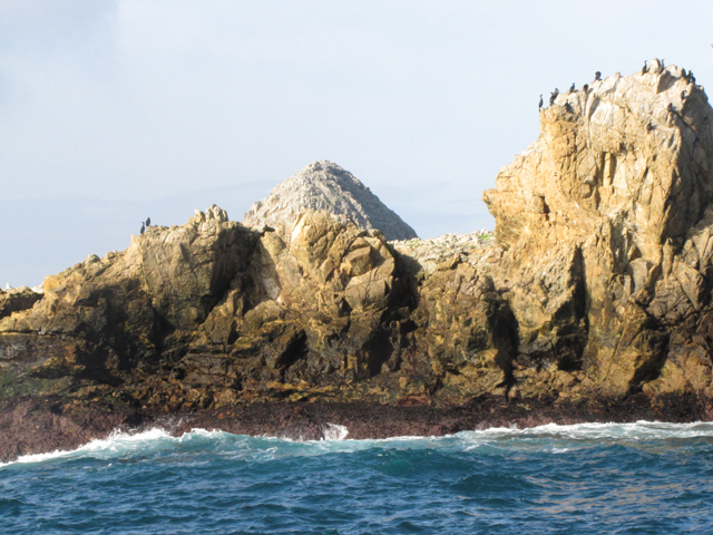 These islands contain the largest seabird nesting colony South of Alaska.