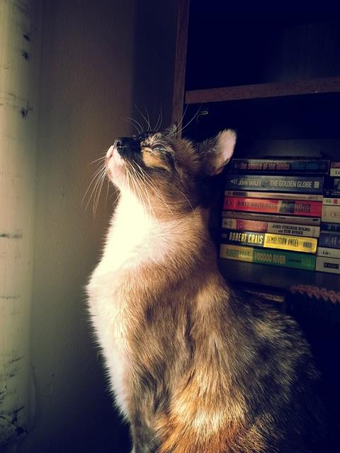 Miss Jenny is bird watching