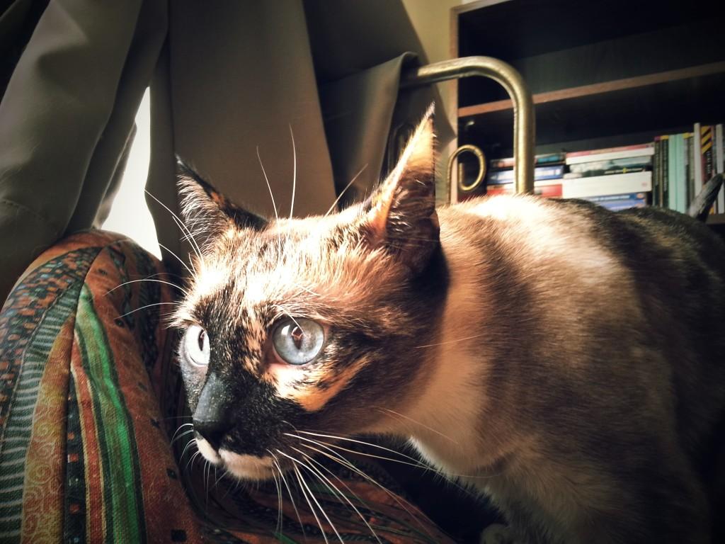Curious Miss Jenny