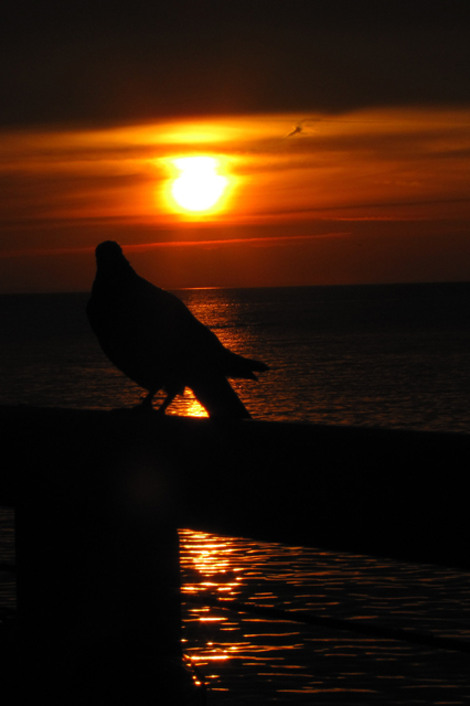 The camera was NOT happy when I aimed it at the sun. It got even and gave me this. It's a pigeon.