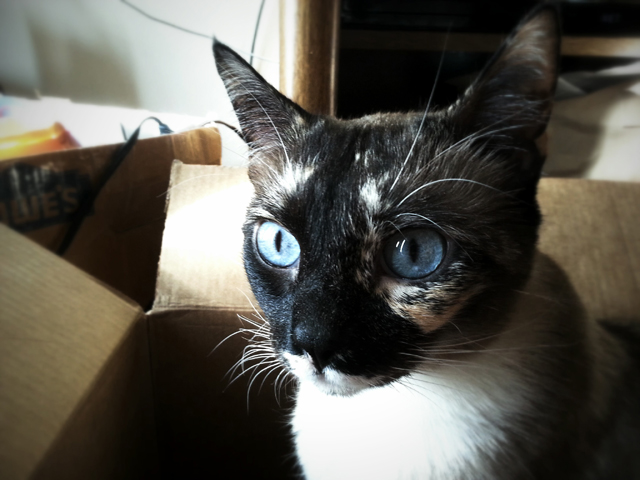 Miss Jenny and her baby blues