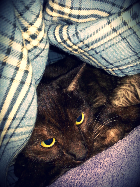 This is Tito after the excitement hiding in the blanket fort