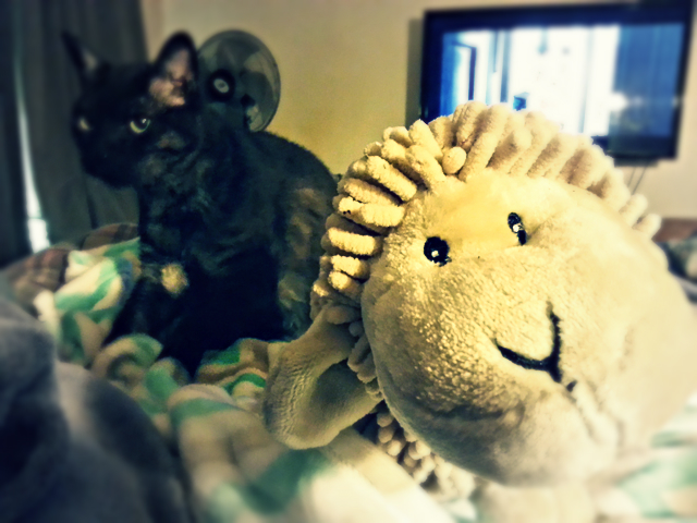 Tito with the sheep. He's making biscuits on the new blankie