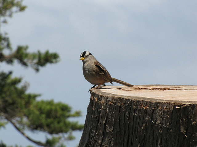 While watching the hawk, this happy sparrow decided to twitter like mad