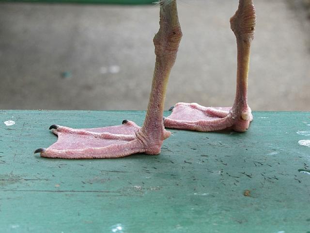 Gull feets!