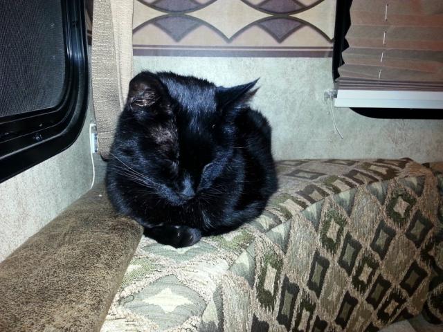 Titanescu, the sleeping curmudgeon