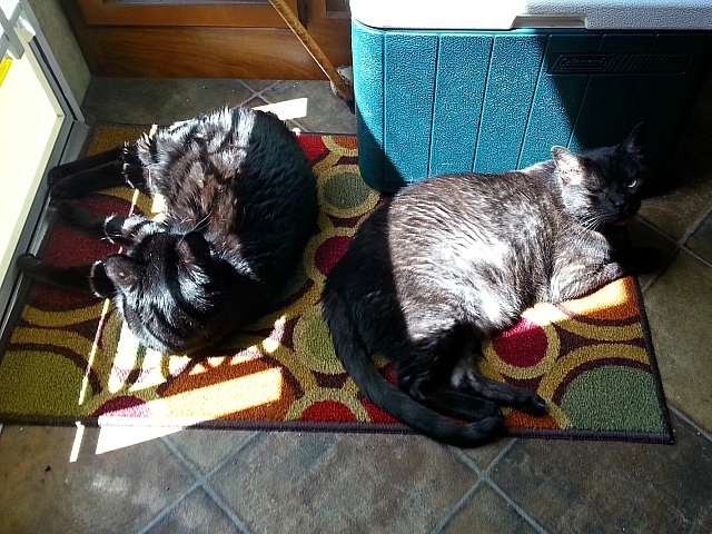 Titanescu (left) and Tito (right) hogging the sunbeam