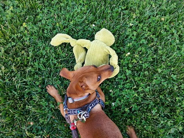 Pepita says it's HER froggie toy