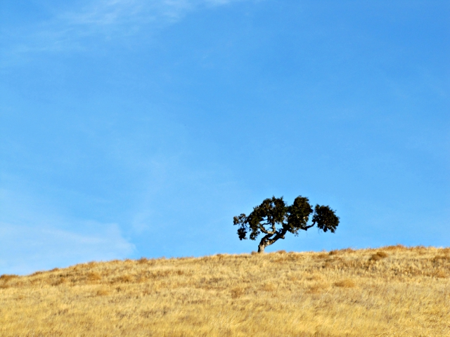 Just a tree on the ridge