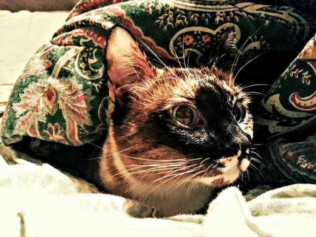 Miss Jenny still hides under the blankets a bit.