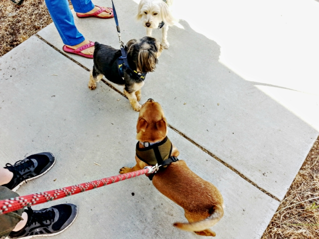 Pepita making friends in the line at the shelter.