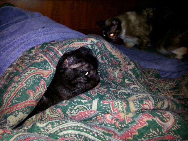 Tito imitating a mole