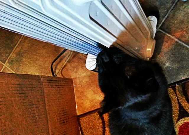 Titanescu: I lubs you heater and you shall be mine!