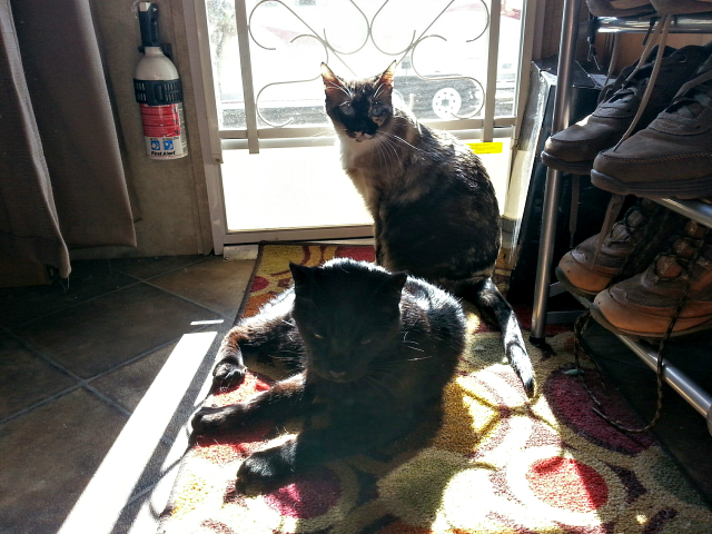 Miss Jenny sharing a sunbeam with Titanescu