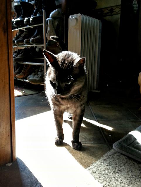 Tito contemplating the sunbeam