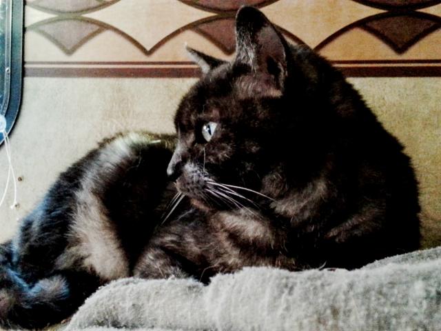 Tito watching the Spring birdies