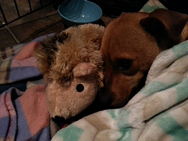 Pepi and her flatulent hedgehog