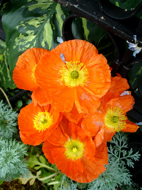 She loved orange flowers. For Tricia Wyse Lefevre September 8th, 1970 - March 5th ,2016