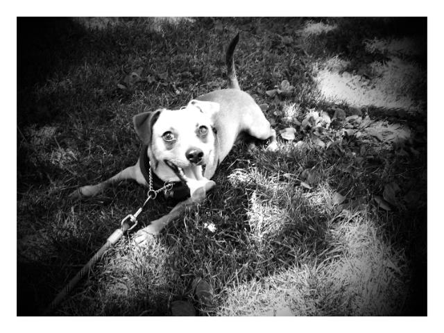 Pepi at the arboretum