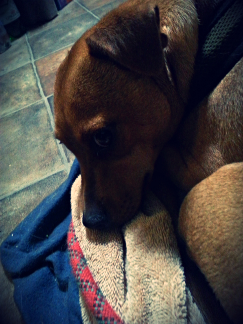 Pepita the dumpster doggie