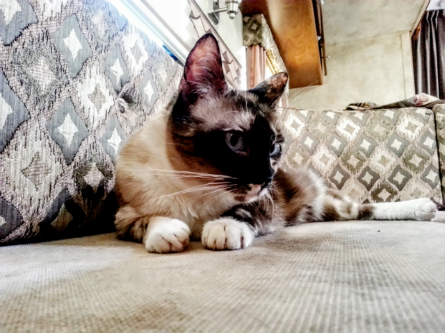 Miss Jenny watching Pepi