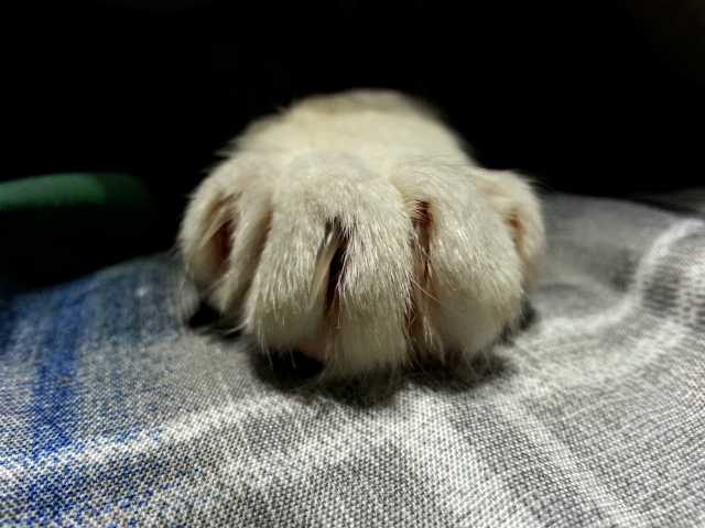 Miss Jenny's paw