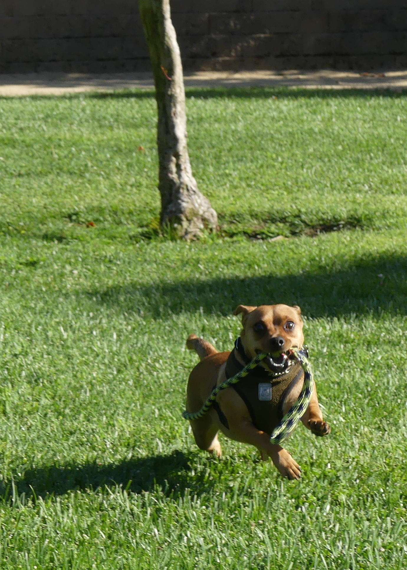 Here's Pepi having a run.