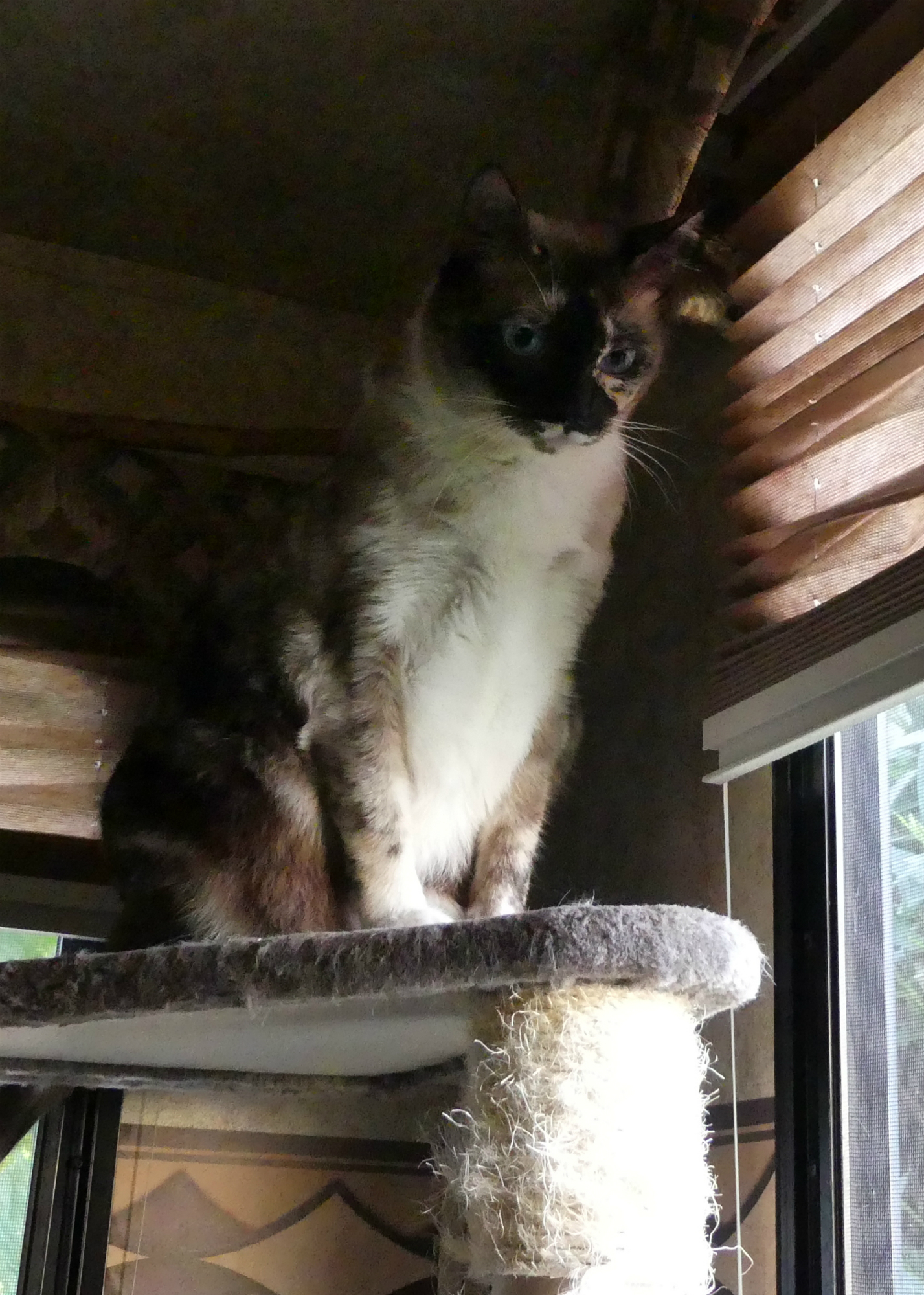 Miss Jenny on her perch