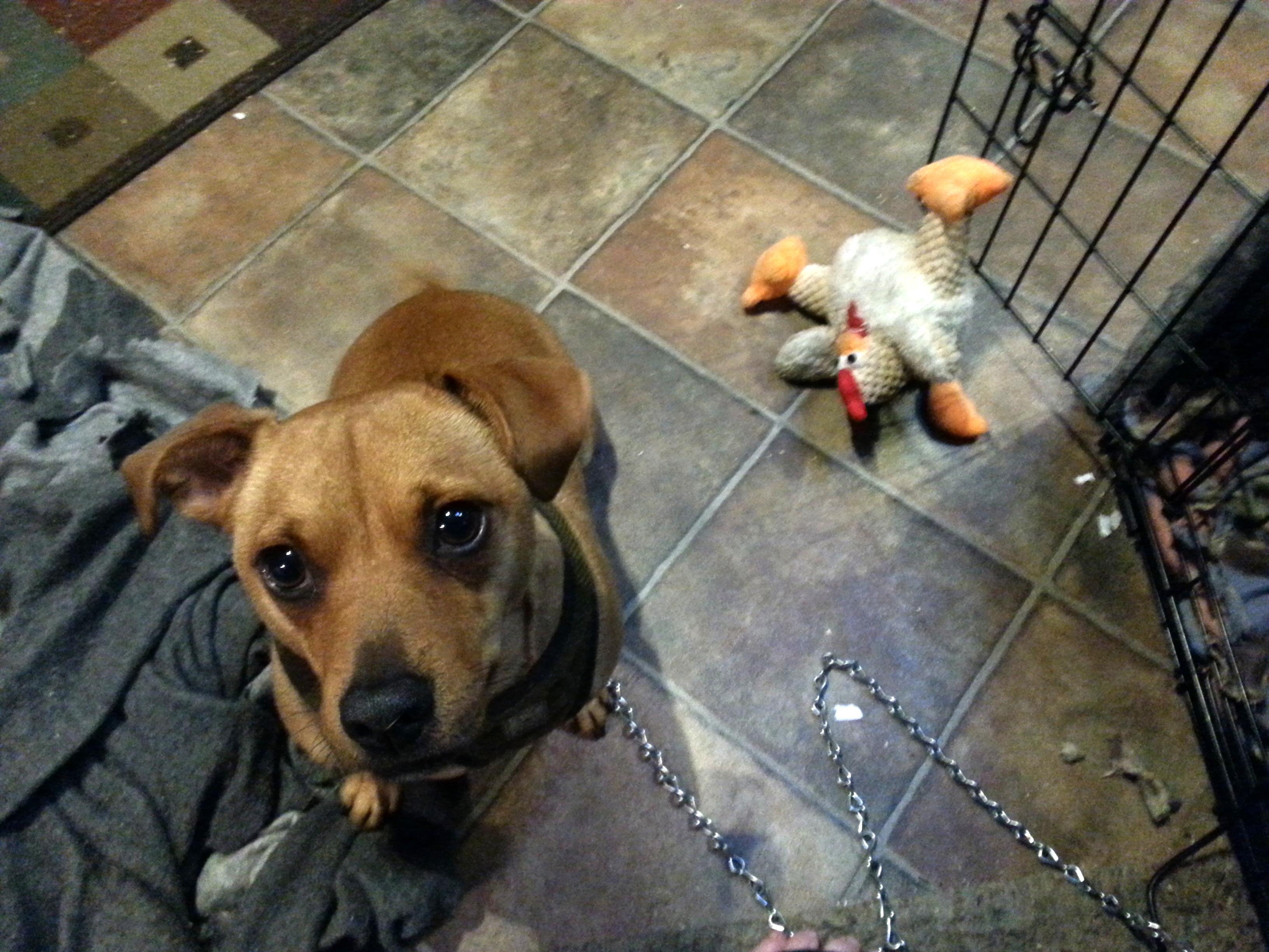 Pepi and the sad chicken