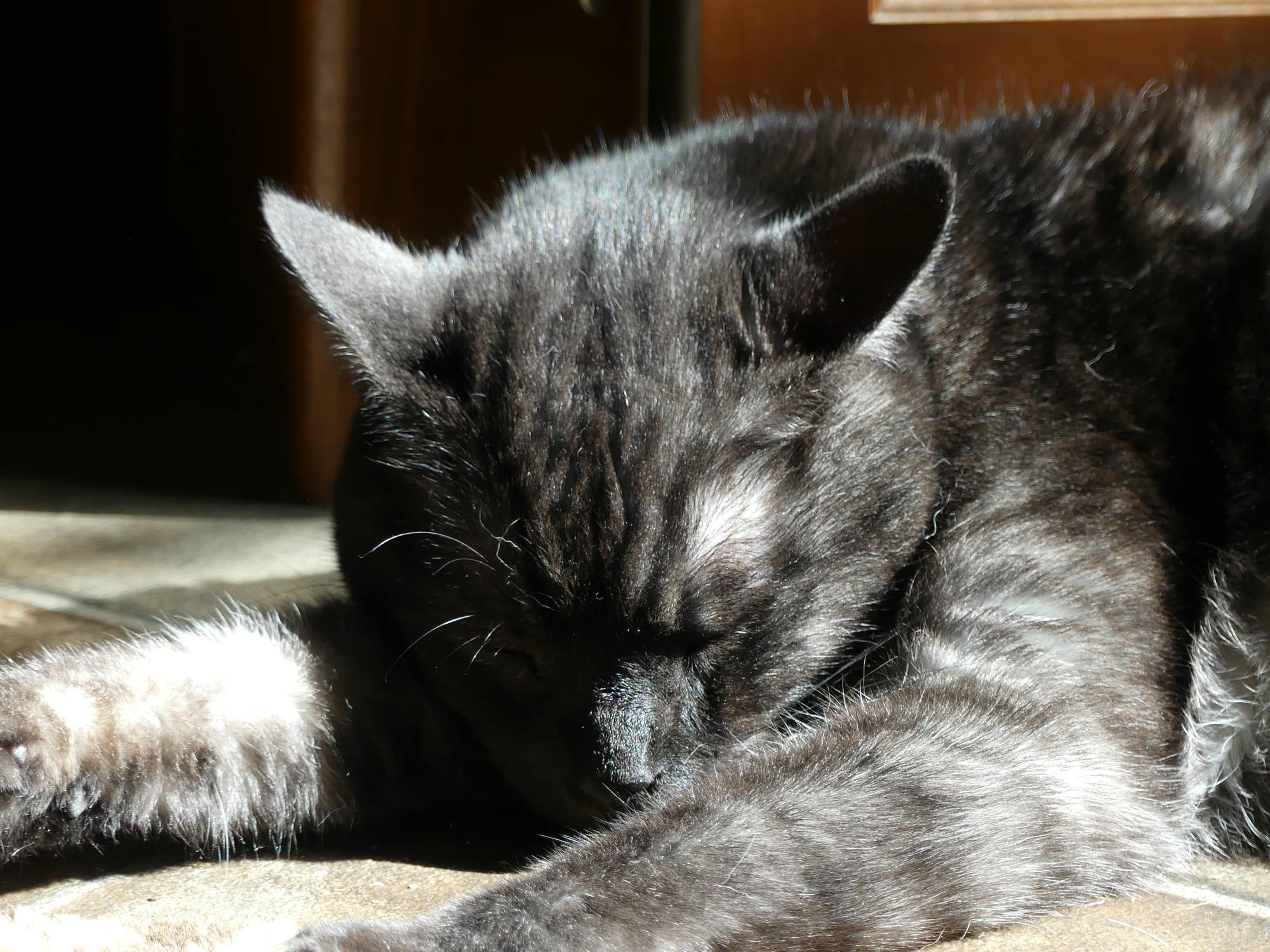 Tito snoozing